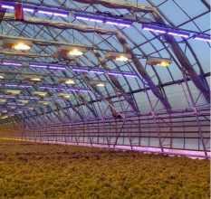 Освещение для теплиц: 4 критерия выбора светильников